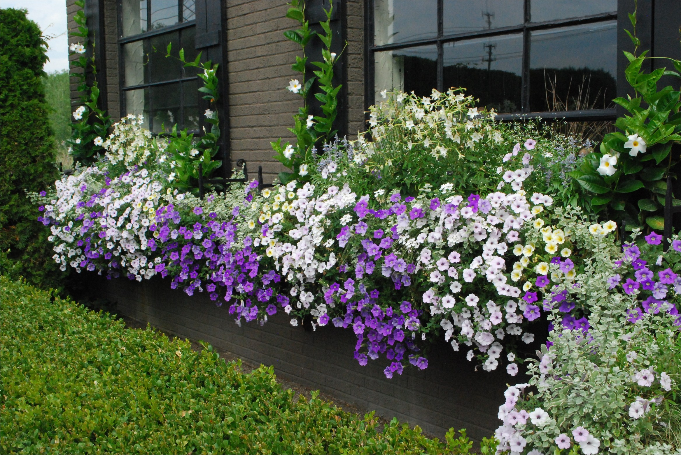 42 Best Flowers for Window Boxes 31 Window Boxes 3