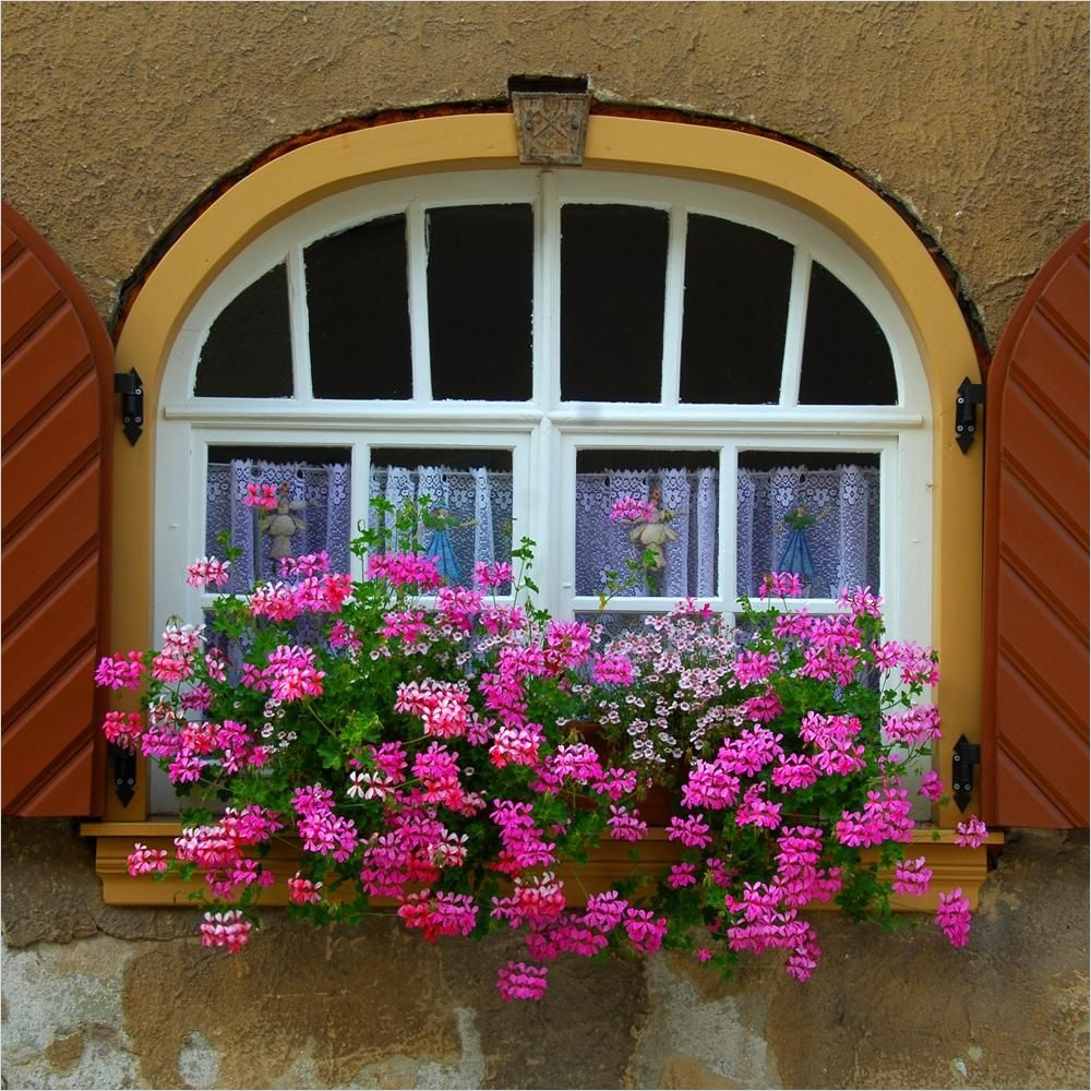42 Best Flowers for Window Boxes 47 Pink Trailing Geraniums Flowers In Containers 9