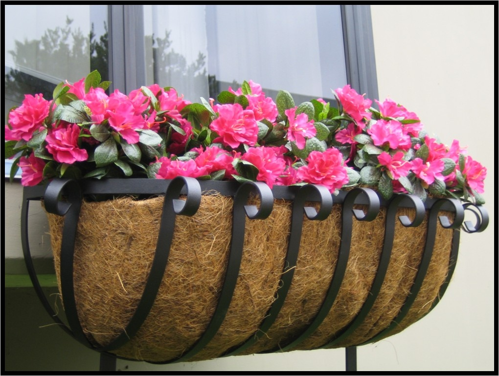 42 Best Flowers for Window Boxes 99 All About Window the Best Flowers for Window Boxes 7