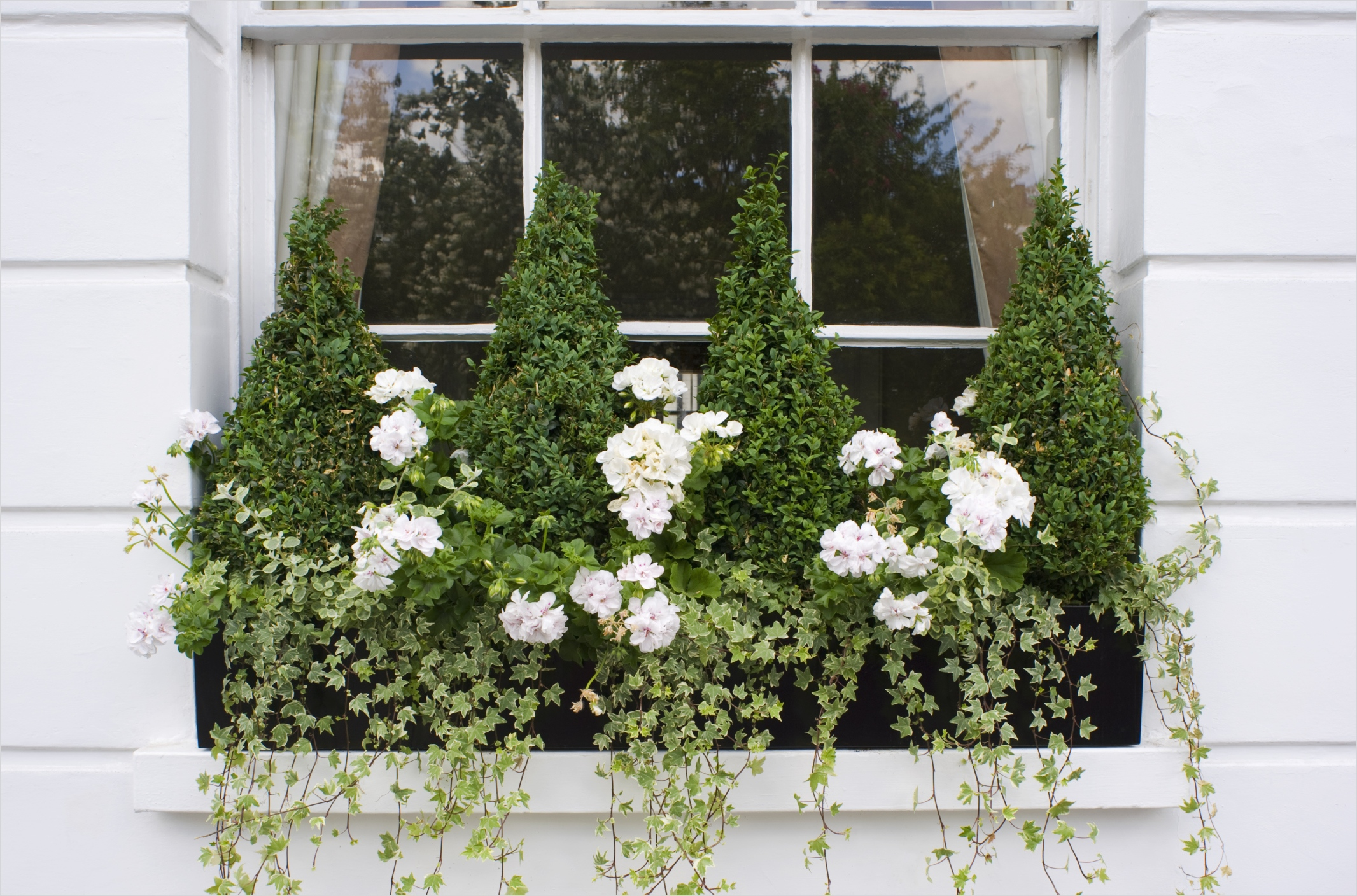 42 Best Flowers for Window Boxes 17 18 Fun Gardening Ideas for Your Window Boxes Window Box Flowers Tips and Ideas 1
