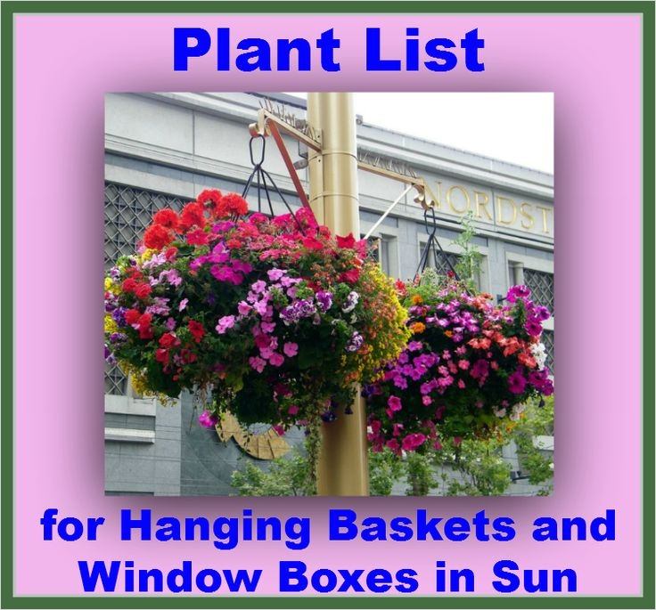 42 Best Flowers for Window Boxes 15 1000 Images About Window Boxes Pots & Baskets On Pinterest 2