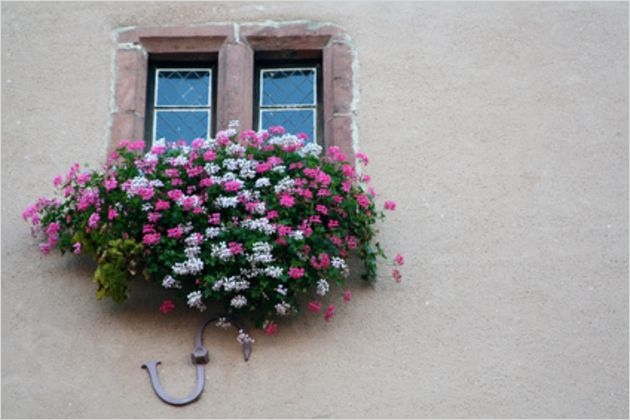 42 Best Flowers for Window Boxes 73 the Best Flower Annuals for A Window Box with 8