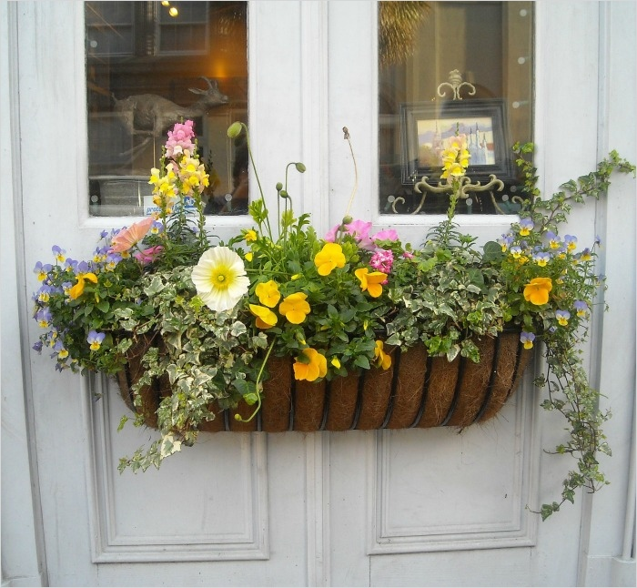 42 Best Flowers for Window Boxes 93 Window Boxes Best Flowers for Window Boxes 28 Window Boxes for Products Medium Kraft Salad 2