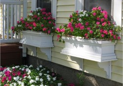 42 Best Flowers for Window Boxes 17 Best Plants for Window Boxes Best Flowers for Window Boxes 8