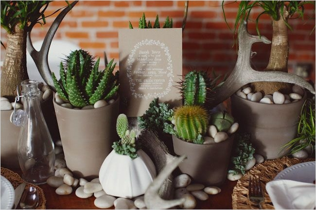 43 Beautiful Cactus Centerpiece Ideas 77 Best 25 Cactus Centerpiece Ideas On Pinterest 9