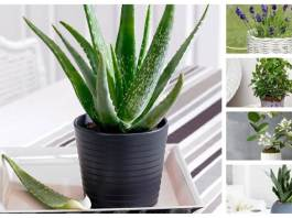 5 Must-Have Plants for Your Bedroom for a Better Sleep