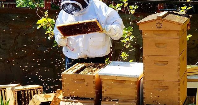 Beekeeping – A Worthwhile Pursuit!
