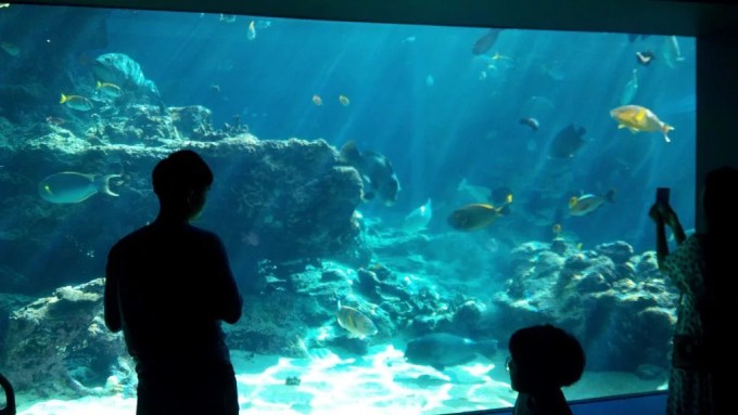 The coral sea in Churaumi Aquarium 2