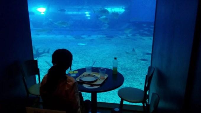 Ocean blue aquarium seat
