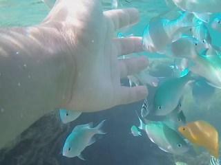 糸満の大度浜海岸ビーチはシュノーケリング初心者でも子供でも熱帯魚と一緒に泳げます、水中動画付きで紹介