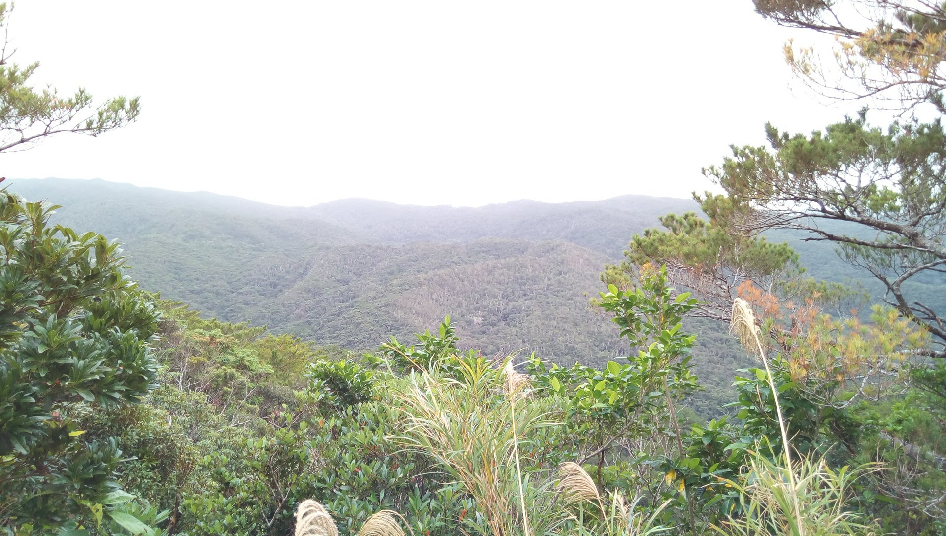 Scenery of Yanbaru tropical forest seen in Kunigami Trail Walk 5