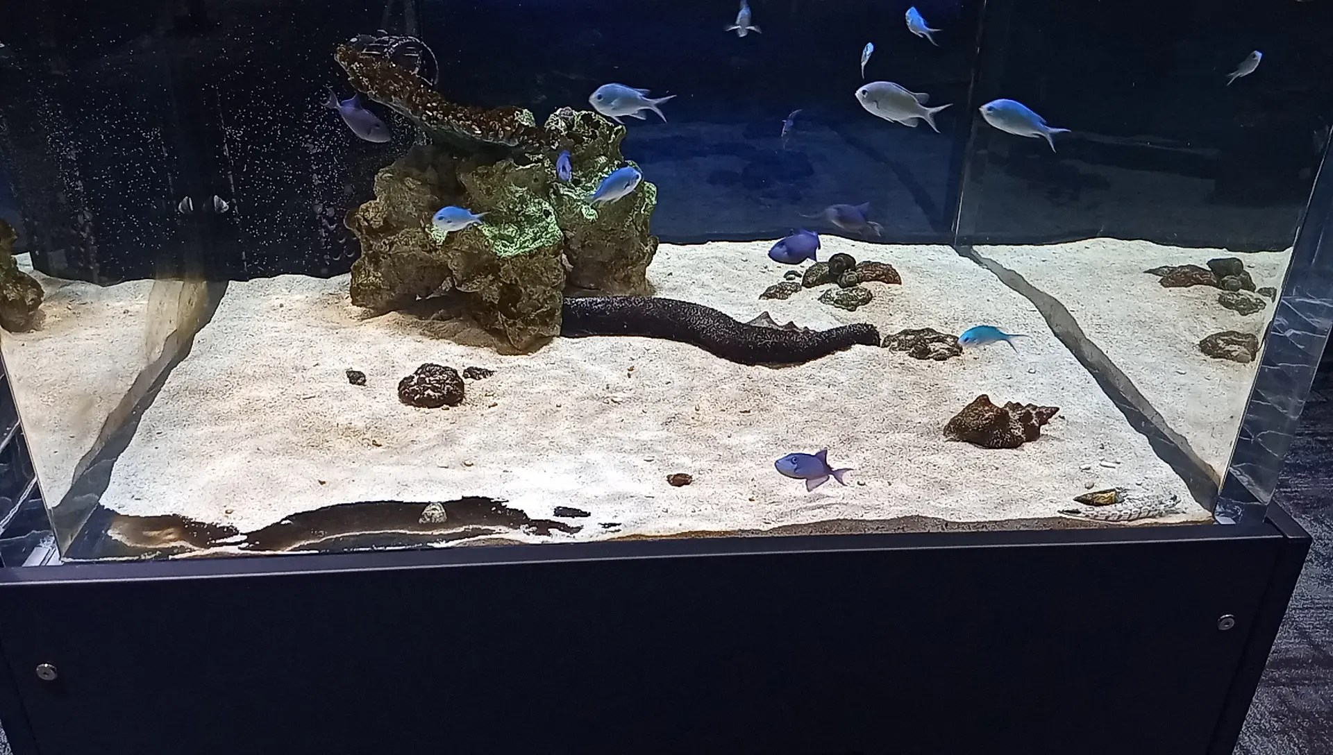Seawater tank 5 on the 1st floor of DMM Kariyushi Aquarium