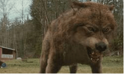Jacob Black, Werewolf, Pic