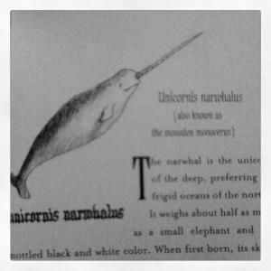 Narwhale, Illustration, Unicorn, RL LaFevers, Beastologist, Nathaniel Fludd, Unicorn's Tale