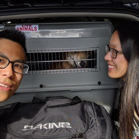 Bringing dogs from the US to Taiwan, Part 2: US departure and Taiwan arrival