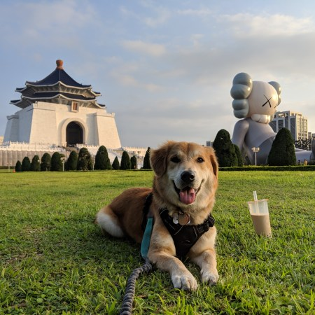 Bringing dogs from the US to Taiwan, Part 1: The decision, process and paperwork