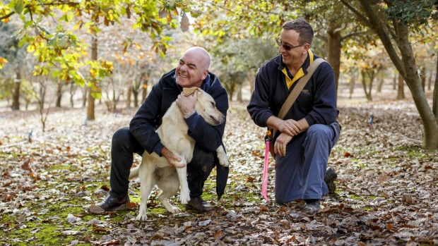 Chef Mark Best (left) and Australian Truffle Traders' Gavin Booth on a hunt in Manjimup, WA.
