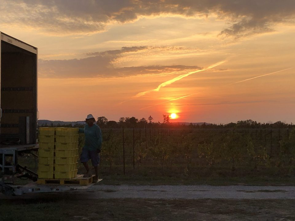 Sunset over the Laundry Home Vineyard.