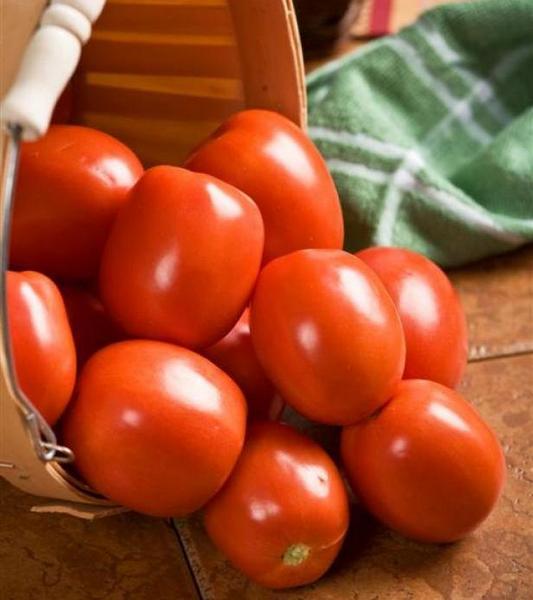 super sauce tomatoes make perfect tomato sauce