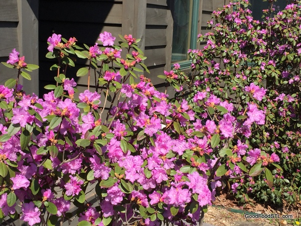 Flowers in bloom at the farm