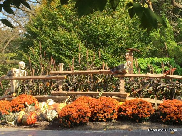Fall at the Missouri Botanical Garden