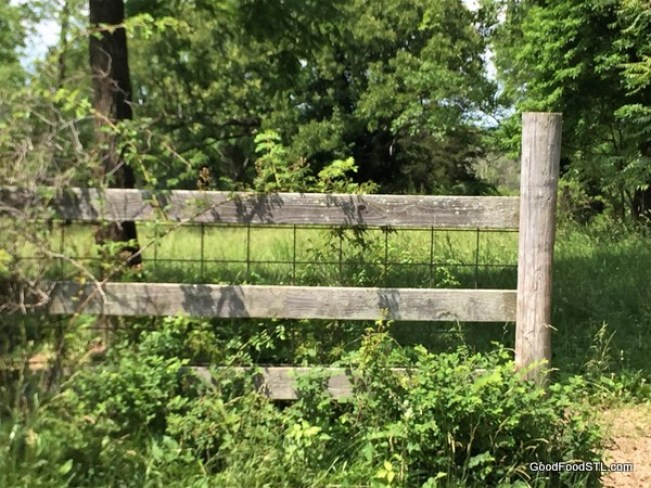 Ozark farm fence
