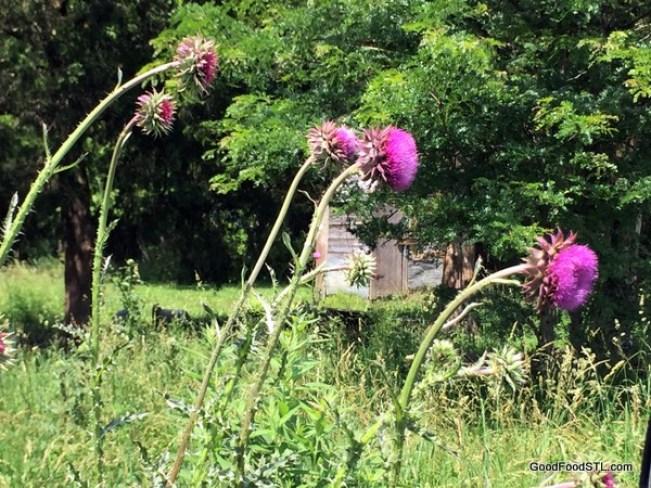 abandoned Ozark cabin scene