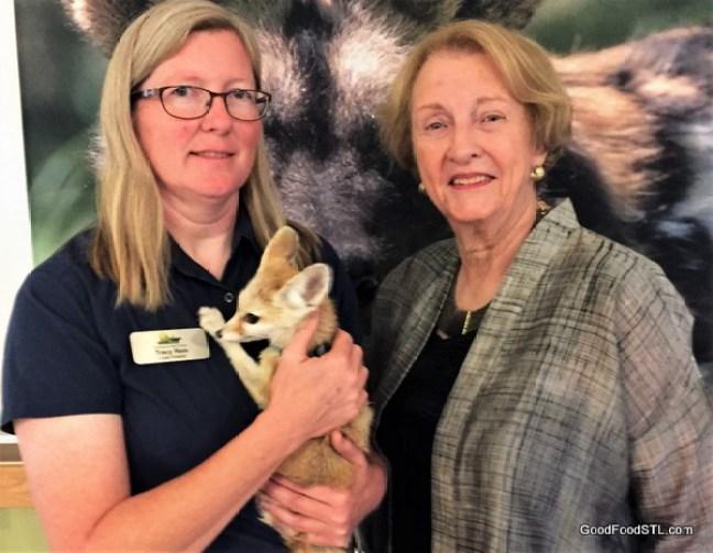 Endangered Wolf Center, a fennee fox