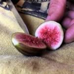 The Splendor of a Fresh Fig