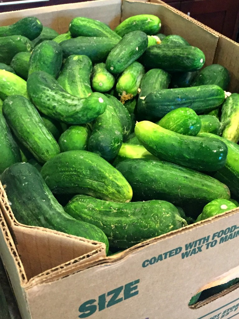 Dirty pickles from Farmers Market