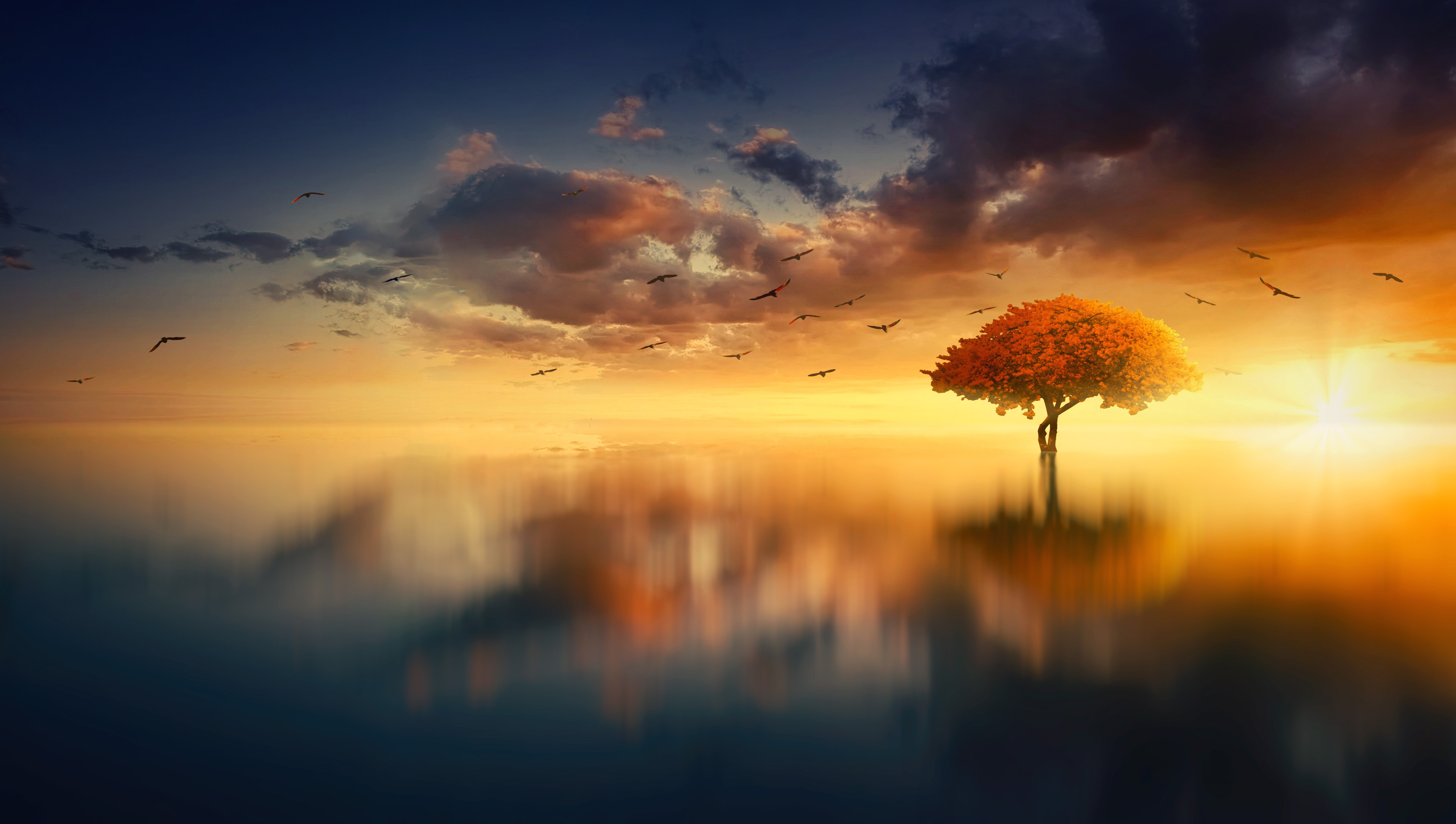 Fall Trees Wallpaper Sunrise Over The Lake With Tree And Birds Image Free