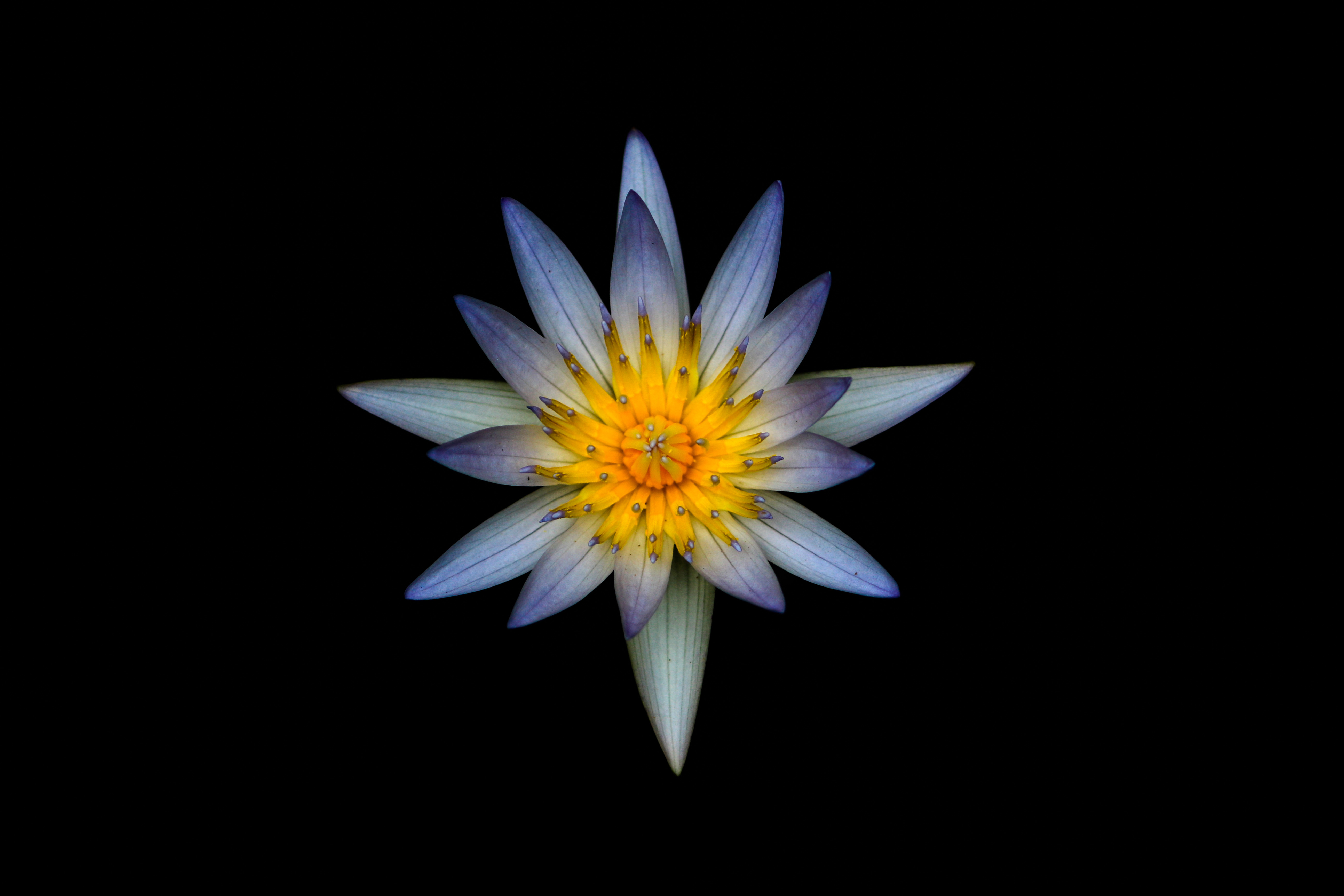 blue flower with yellow
