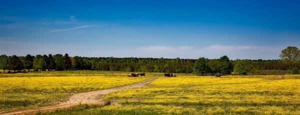 Alabama Farm Landscape