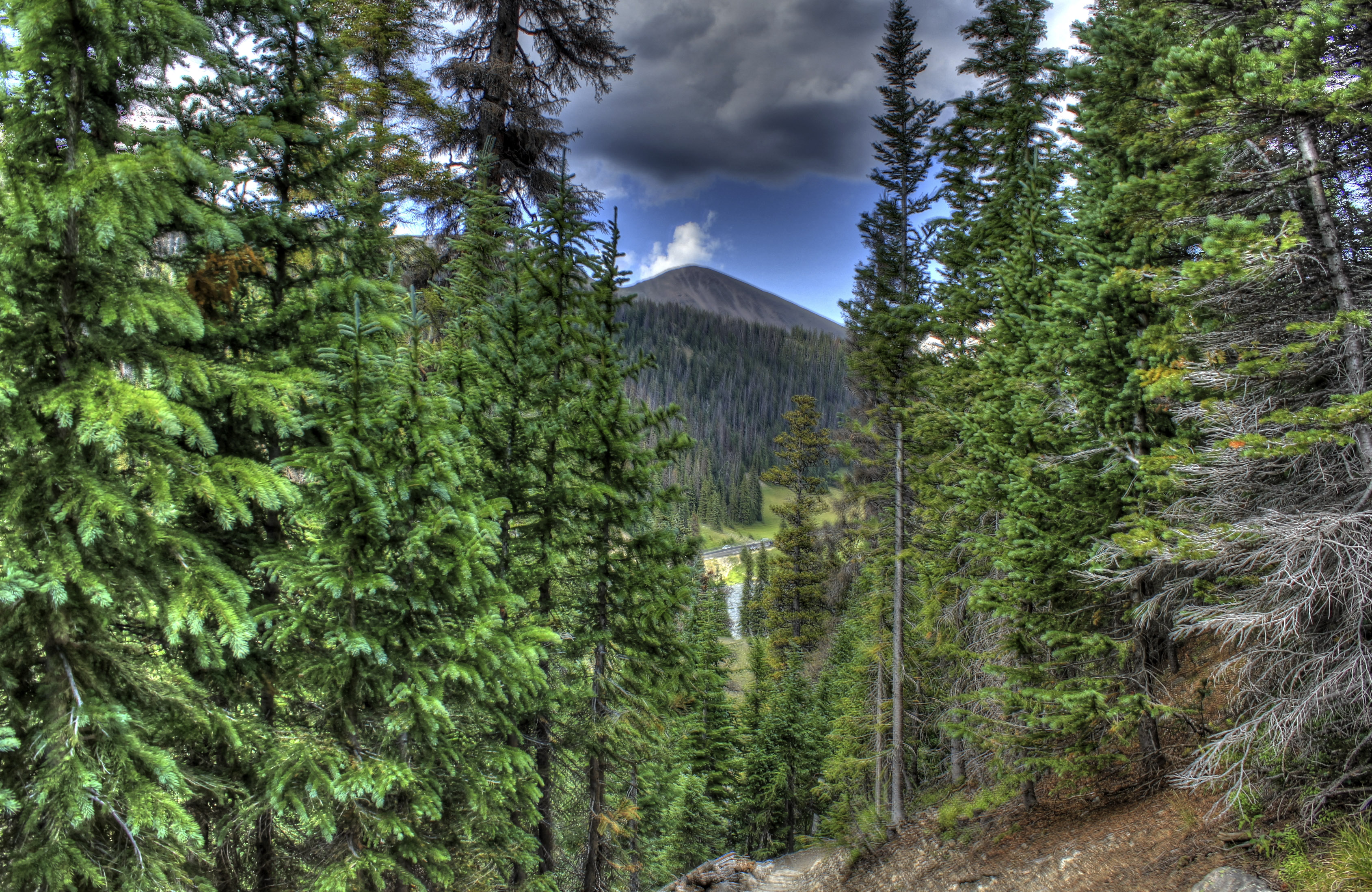 Peak Between the Trees at Rocky Mountains National Park