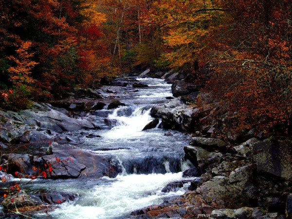 Cascading Rapids Landscape In Great Smoky Mountains National Park Tennessee - Free Stock