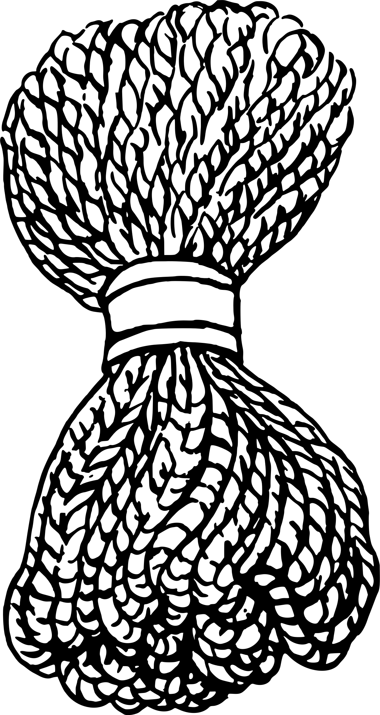 Bunch Of Rope Vector Clipart Image