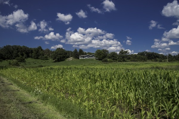 cornfield and house landscape