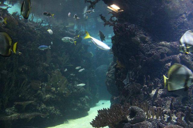 Burgers Ocean-Diepzee Monsters musical-GoodGirlsCompany