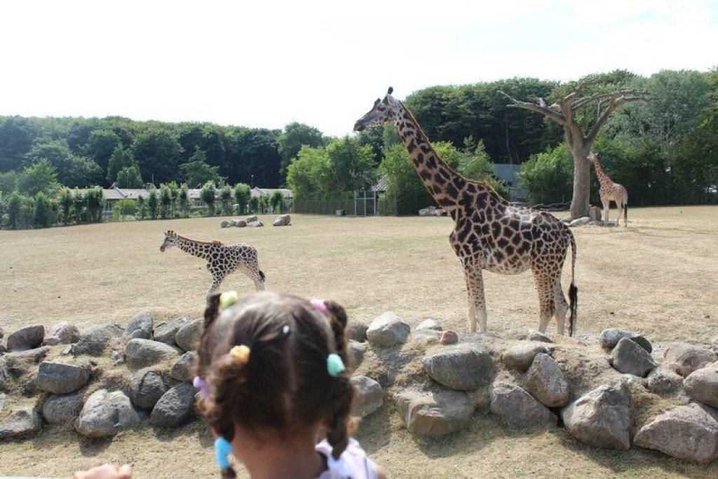 Afrika safari aalborg zoo