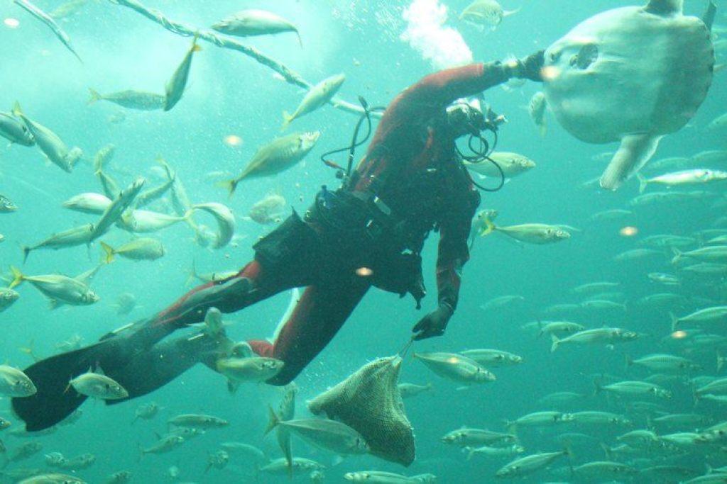 Nordsøen Oceanarium klumpfisk