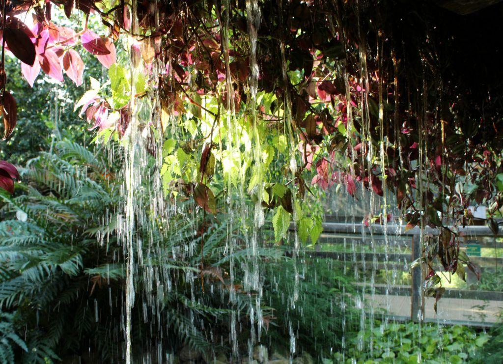 Tropische tuin Erlebnispark Emsflower