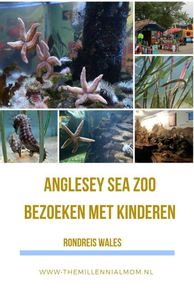 Anglesey Sea Zoo bezoeken met kinderen