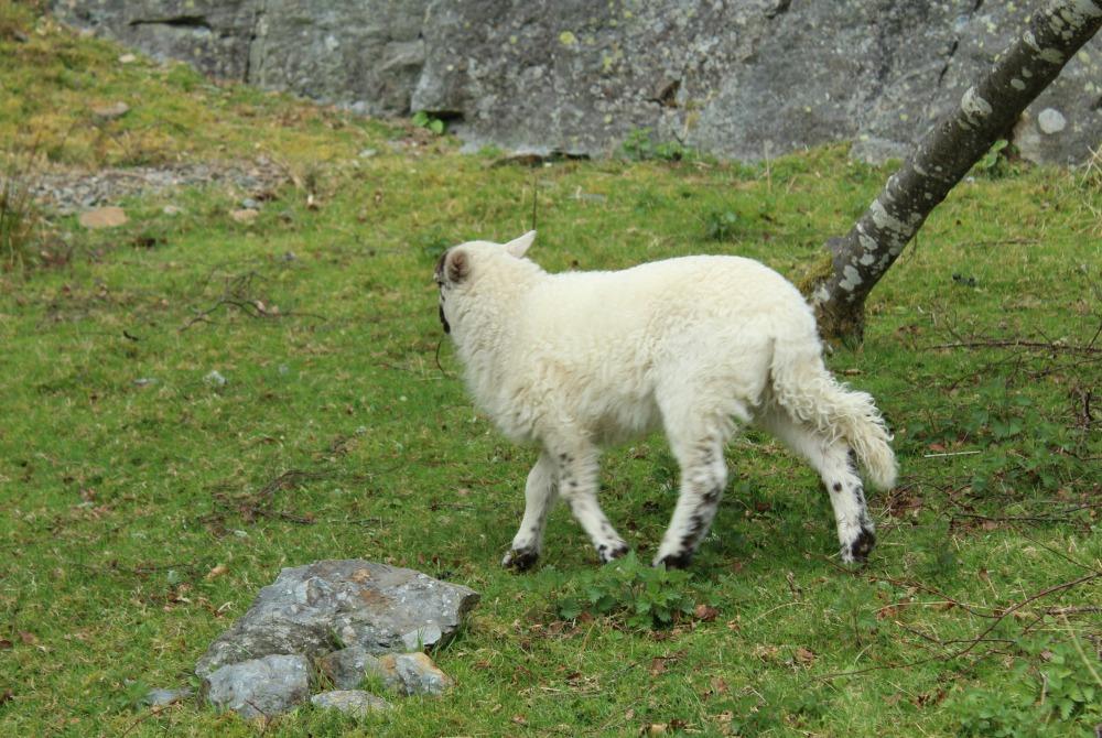 natuur in Wales