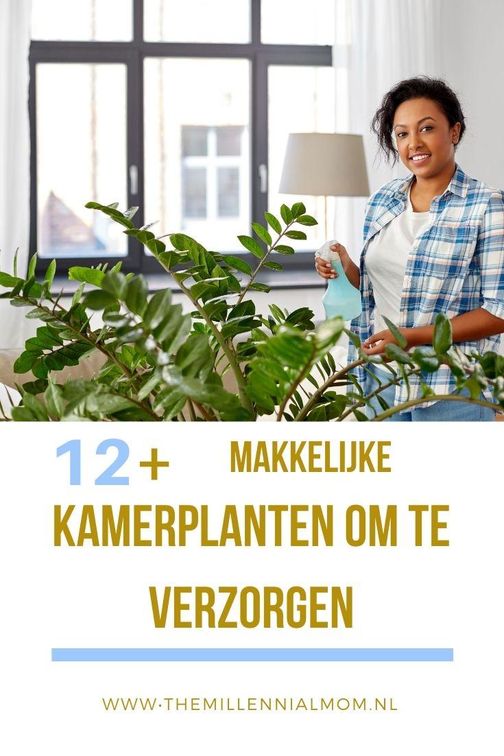 makkelijke woonkamerplanten om te verzorgen