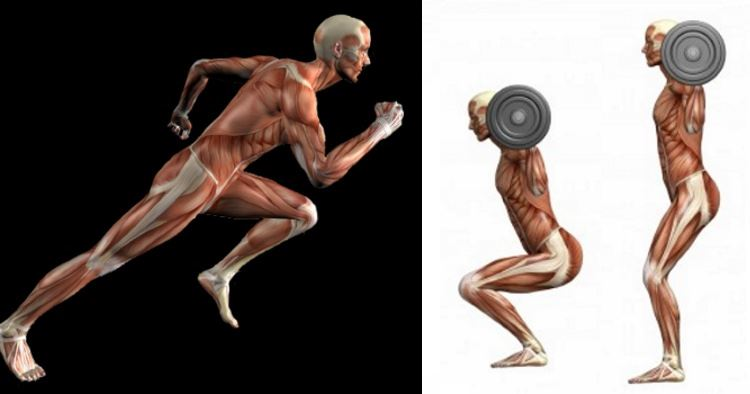 10 Reasons Lifting Is Better Than Cardio – Fitness and Power