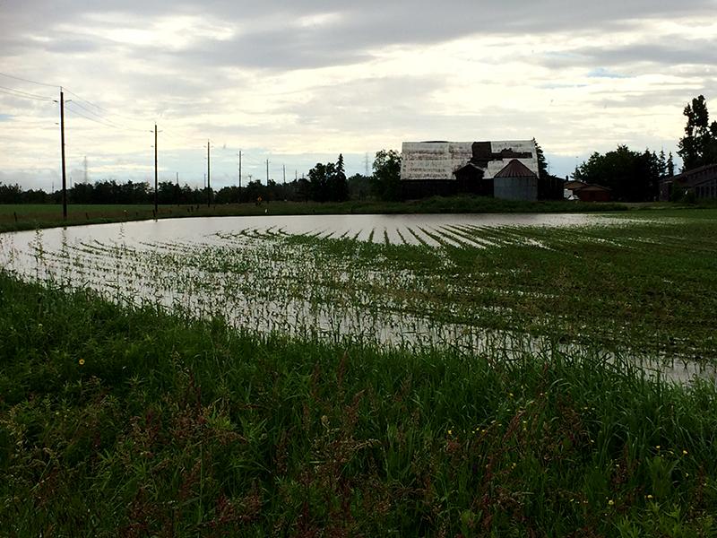 Field in East Garafraxa full of water