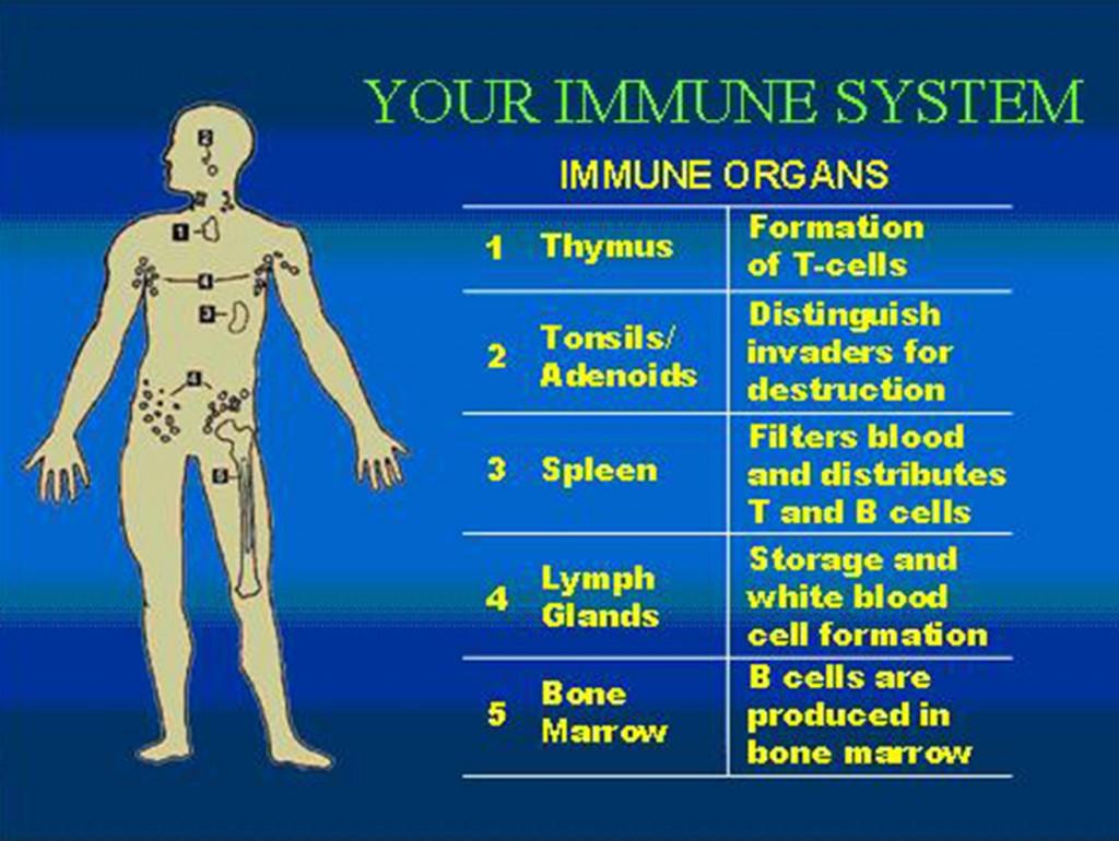 immune system diagram 2008 ford ranger fuse box good life connoisseur