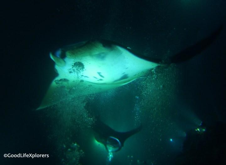 Manta Dive Night