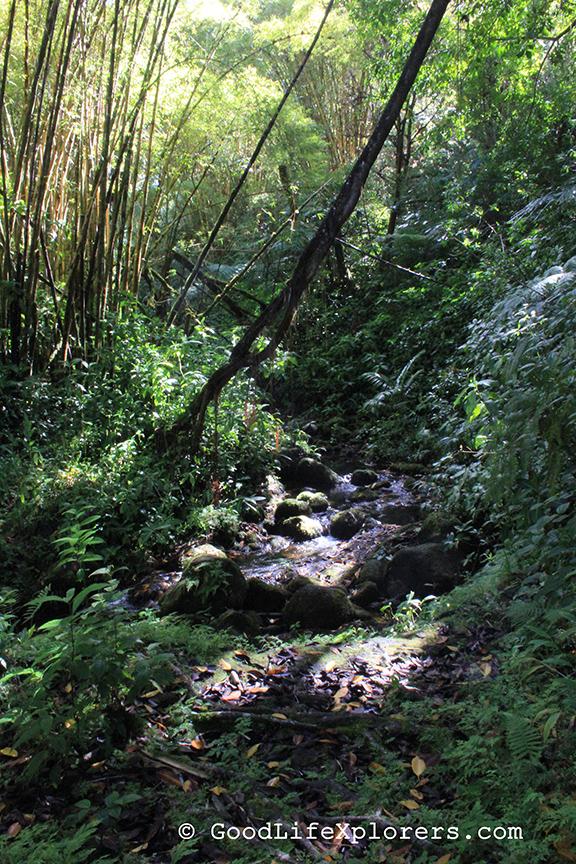Akaka Falls State Park, Hiking, Hawaii, Big Island, Travel