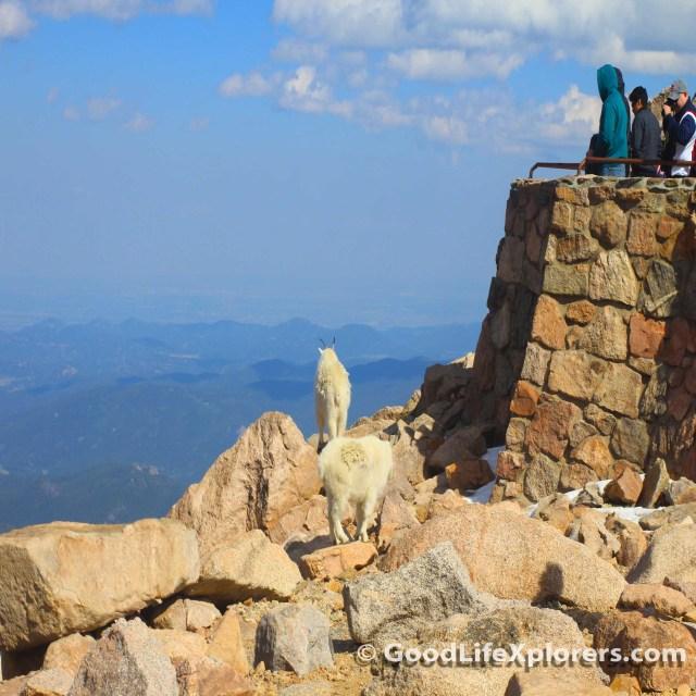 Peak of Mount Evans